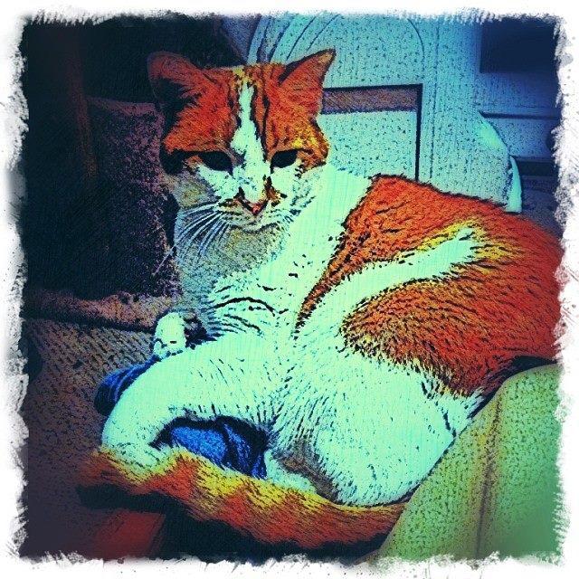 brewskie-butt-orange-white-cat-digital-art-bztat