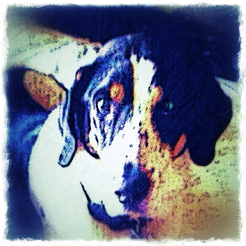 Hound Dog - Custom Digital Fine Art Pet Portrait by Animal Artist BZTAT