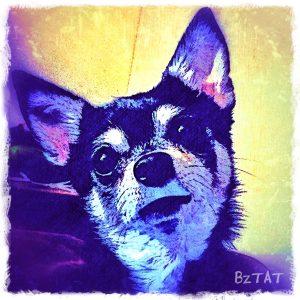 Contemporary Digital Chihuahua Dog Portrait by Artist BZTAT