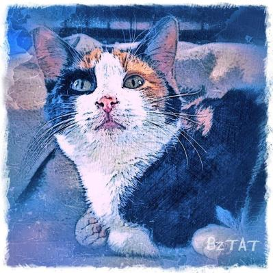 CALICO CAT kitten digital pet portrait by Artist BZTAT