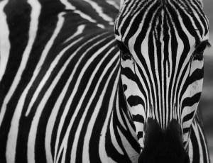 Colourful Zebra, fotograaf in Gent gespecialiseerd in mensen