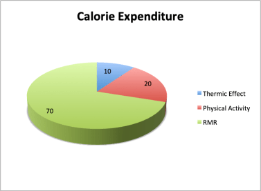 Calorie Expenditure, how are your calories burned - Longevity as a Training Goal