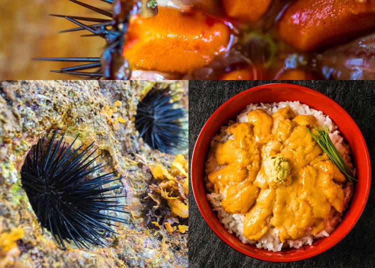 2) Uni – Sea Urchin
