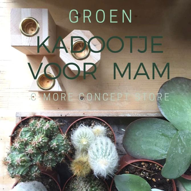 Planten en Bloemen bij C-More Concept Store
