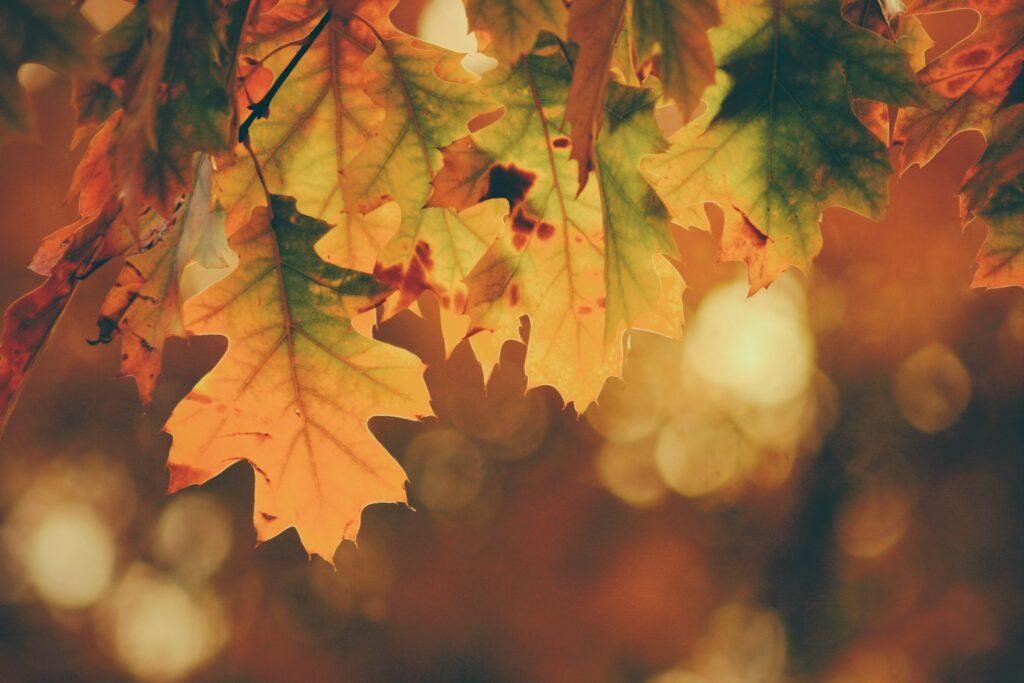 détox automne