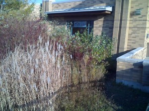 Tall Grass Delight: Humberwood Library (1996) (2/6)