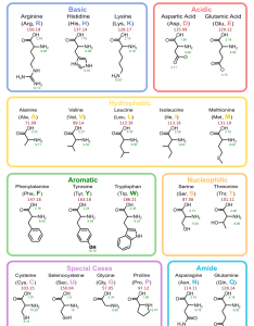 Chart of amino acids also cheng tan   website rh