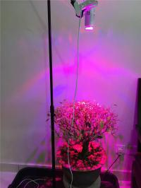 7W LED Grow Light for indoor plants (end 4/12/2016 1:15 PM)