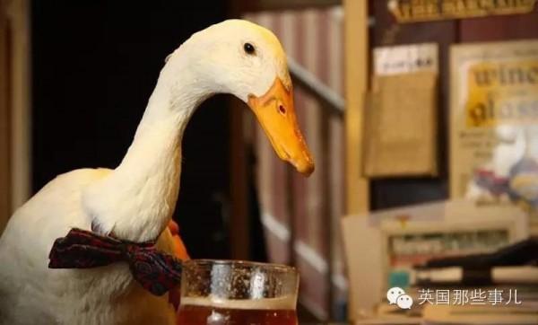 英國有隻鴨,灌了一大杯酒,醉了膽子大了,竟然跑去揍狗!結果...