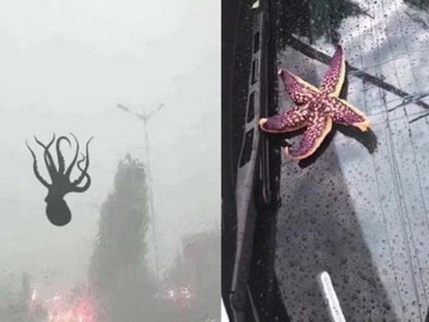 فضا سے کیکڑے، سیپیاں اور اسٹار فش گاڑیوں اور سڑکوں پر بارش کی صورت میں برسنے لگے (فوٹو: ٹویٹر)