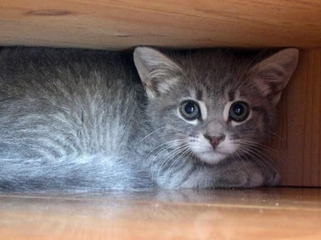 جاپان میں زلزلے سے قبل بلیاں خوف زدہ ہوگئی تھیں (فوٹو: فائل)