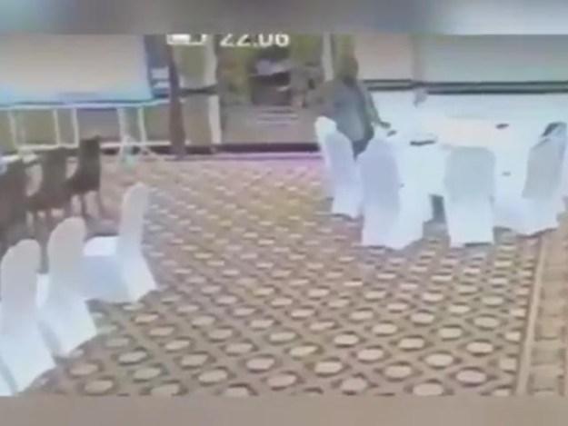 ضرارحیدر پر الزام ہے کہ کویتی وفد کا دینار سے بھرا پرس چوری کرلیا تھا۔ :فوٹو:فائل
