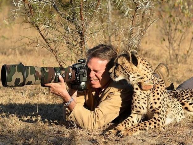 دنیا کے مشہور وائلڈ لائف فوٹوگرافر کِرس ڈیو پلیسِس کسی عمدہ منظر کو قید کرنا چاہ رہے تھے کہ ایک جنگلی چیتا ان کی مدد کو آپہنچا۔ فوٹو: ڈیلی میل