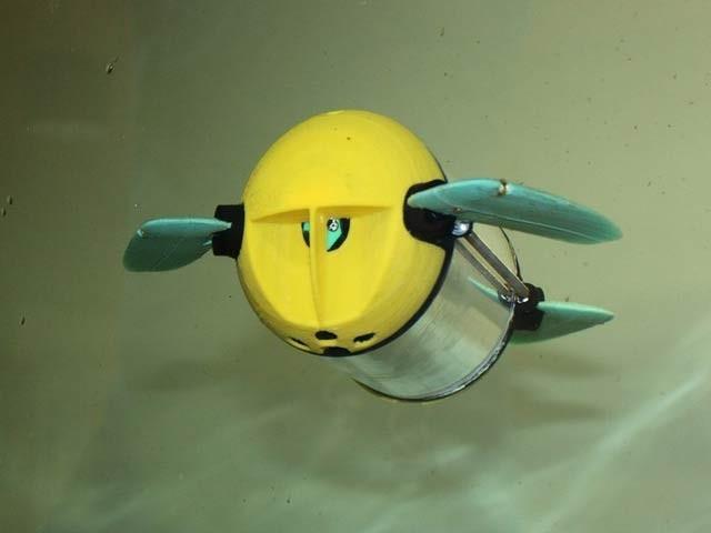 مچھلیوں کے فارم کا چوکیدار، 'روبوٹ کچھوا'