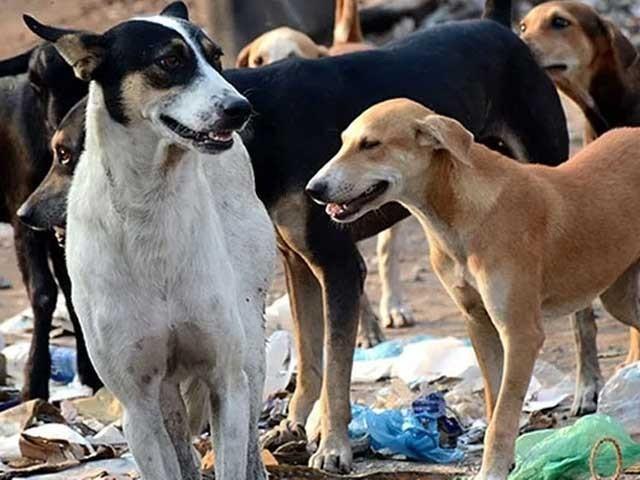 ایک آوارہ کتا لاؤ اور 200 روپے انعام پاؤ، محکمہ لائیو اسٹاک خیبرپختونخوا کی پیشکش