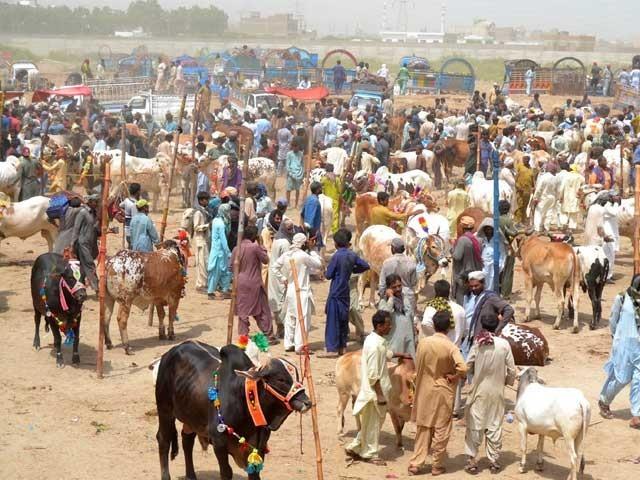 خیبر پختون خوامیں ایس او پیز کے تحت مویشی منڈیوں کی اجازت دینے کا فیصلہ
