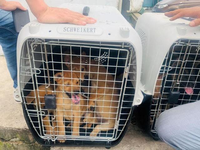 کمبوڈیا میں کتے کا گوشت کھانے اور فروخت کرنے پر پابندی اور جرمانہ