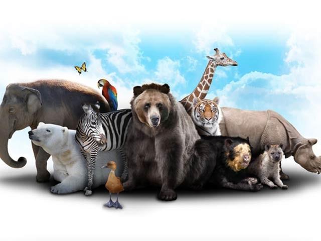 پچاس برس میں عالمی جنگلی حیات 68 فیصد کم ہوگئی، ڈبلیو ڈبلیو ایف
