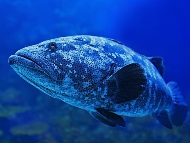 مچھلی کا ڈپریشن دور کرنے کےلیے سالگرہ منائی گئی