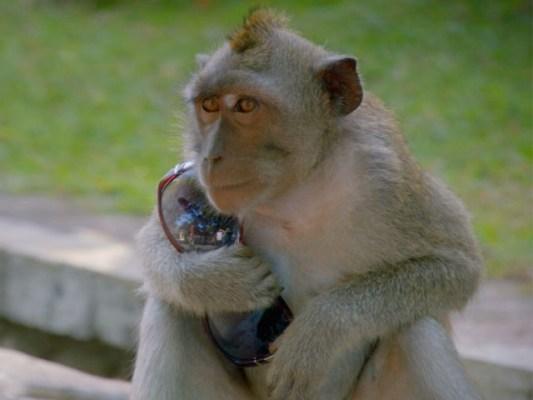 پولیس نے دو افراد کو بندروں سمیت حراست میں لے لیا ہے، فوٹو: فائل