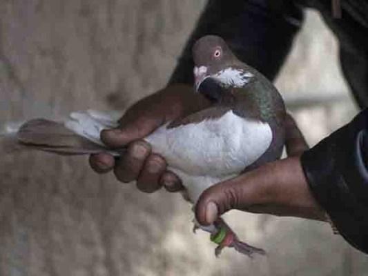 ایک پرندے کے خلاف مقدمہ کیسے درج کیا جاسکتا ہے قانونی ماہرین سے رائے مانگی ہے، بھارتی پولیس ۔ فوٹو : فائل