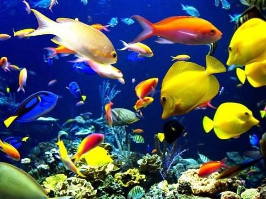 ماحولیاتی تنظیموں اور سائنسی اداروں نے دنیا بھر کے سمندروں کو بچانے کا عالمی پانچ سالہ منصوبہ شروع کیا ہے۔ فوٹو: فائل