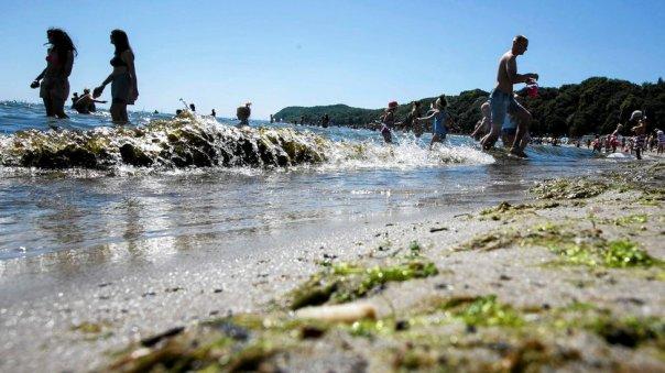 Algas tóxicas en la playa Gdynia, en Polonia, en julio.