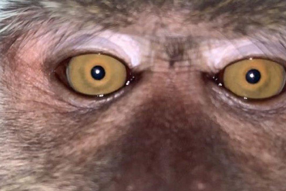 Monkey screenshot