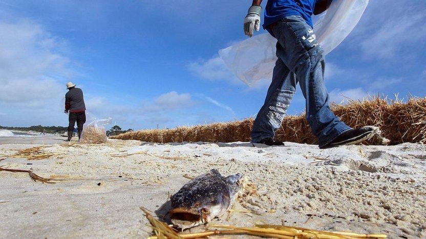 """119790157 gettyimages 99568857 - """"Zona muerta"""" del Golfo de México: la preocupante expansión de esta área en la que la vida marina es imposible"""