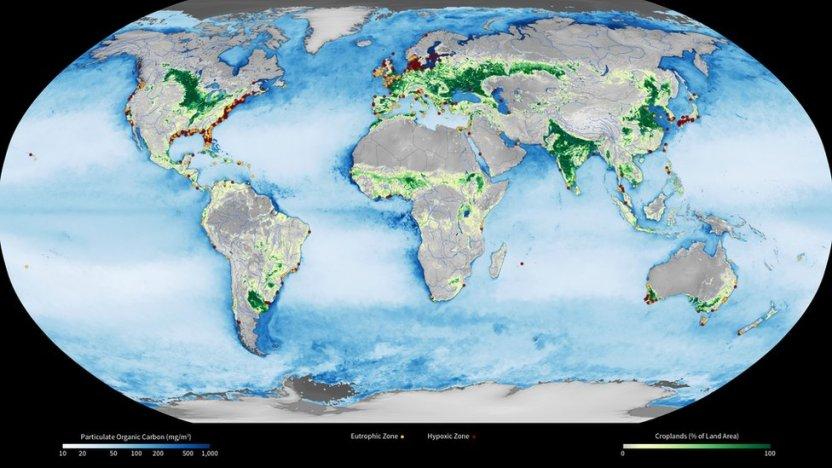 """119789587 hi054576463 - """"Zona muerta"""" del Golfo de México: la preocupante expansión de esta área en la que la vida marina es imposible"""