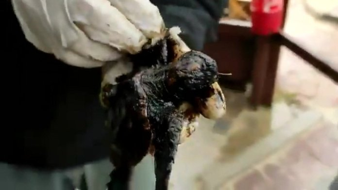 A tar-covered turtle is cleaned up by the Israel Nature and Parks Authority, 21 February 2021