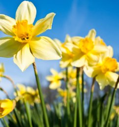 spring equinox 2019 why are nights and days different lengths over the year cbbc newsround [ 2048 x 1152 Pixel ]