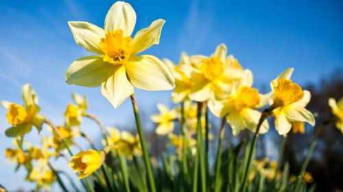 small resolution of spring equinox 2019 why are nights and days different lengths over the year cbbc newsround