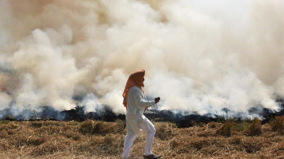 Un agriculteur brûle du chaume de paille après avoir récolté une récolte de riz, dans un champ près de Jandiala Guru, le 17 octobre 2020 à Amritsar, Inde