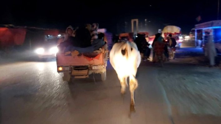A cow running along the road with various vehicles