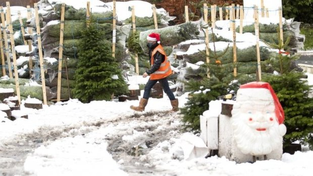 Dave Baptie works in the snow at the Hill End Christmas Tree Centre near Edinburgh