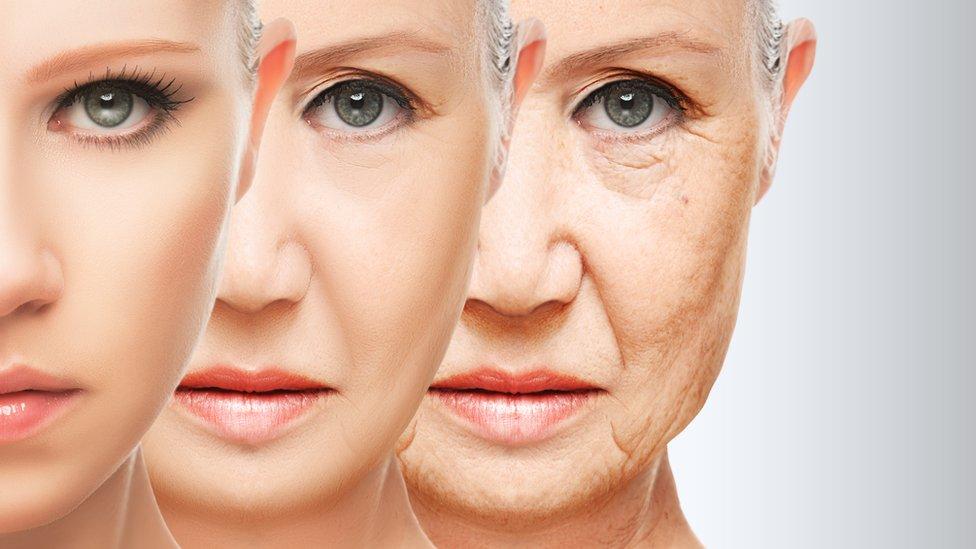 Proceso de envejecimiento