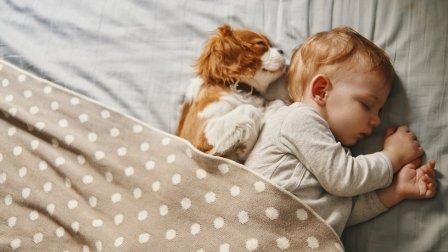 Bebé durmiendo con un perro en la cama