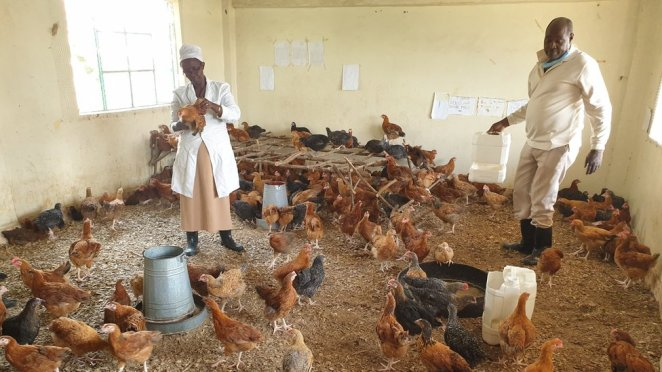 Coronavirus in Kenya: How it turned classrooms into chicken coops - BBC News