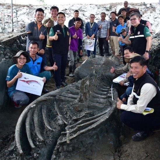 Araştırmacılarla balina iskeleti