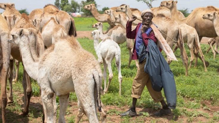 इथियोपिया में एक पुराने शरणार्थी शिविर की साइट पर घुमंतू सोमाली बोलने वाले ऊंट चरवाहों