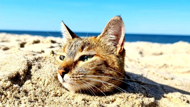 cat in the sand
