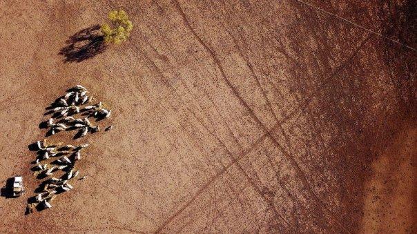 Vista aérea del ganado en Nueva Gales del Sur