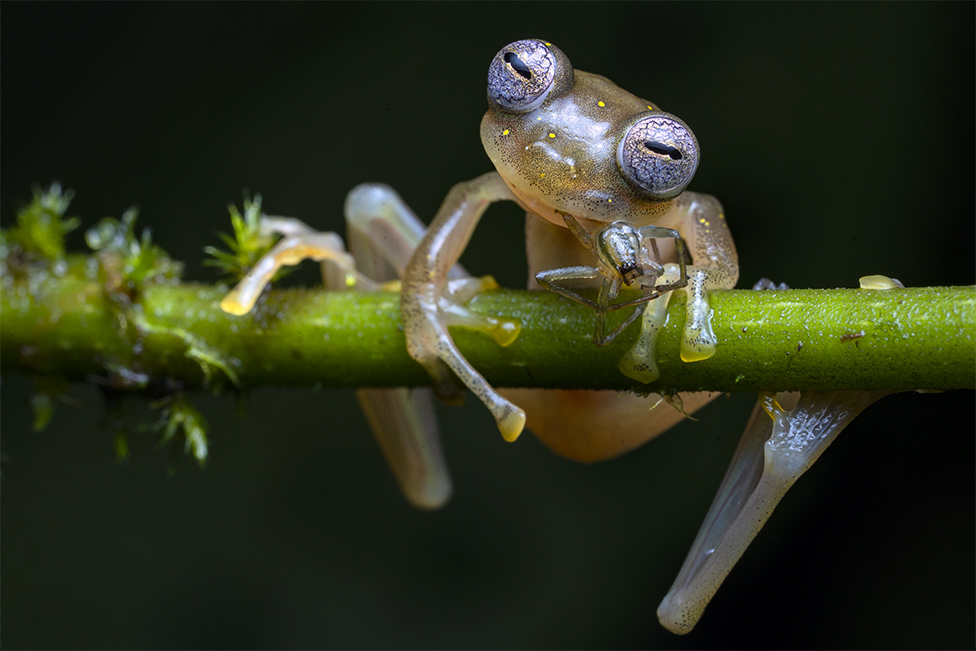 Life in the balance by Jaime Culebras, Spain