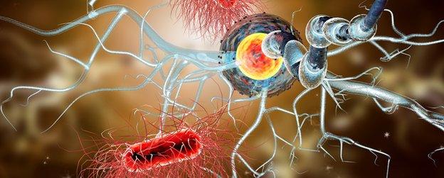 Una célula de multiesclerosis