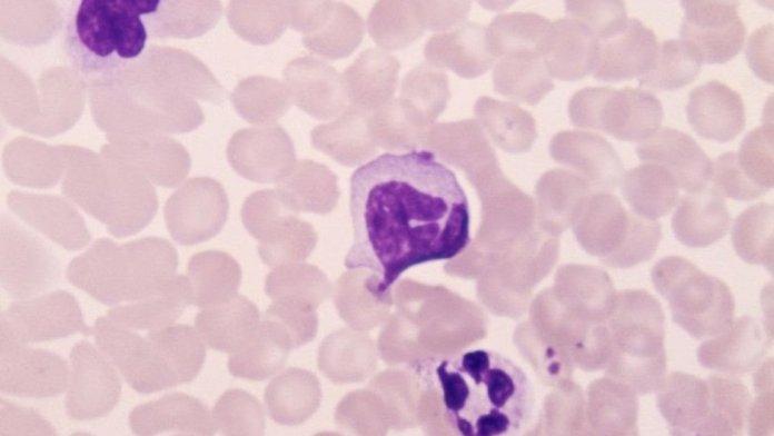 Lymphocytes