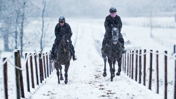 Horses on the gallops in the snow at Sam Drinkwater's Granary Stables in Upper Strensham, Worcestershire.