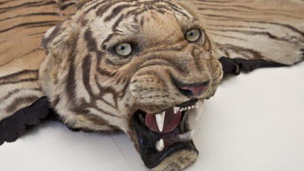The tiger rug at Kedleston