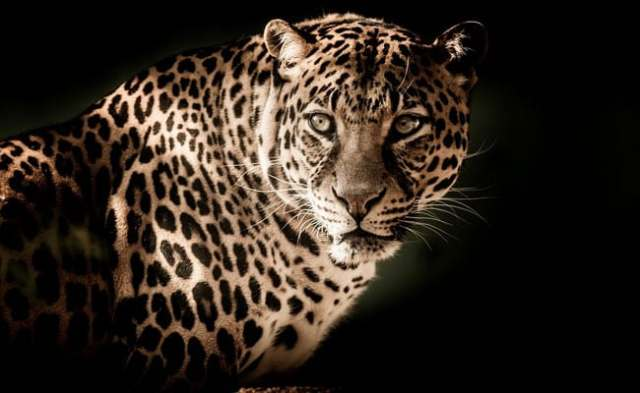Woman Fights Off Leopard With Bare Hands In Bengal Tea Garden: Report
