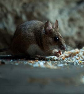 Hantavirus Death In China Spooks Twitter: All You Need To Know